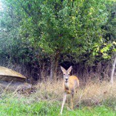 Schützen und Naturschutz – in Dietzenbach eine perfekte Symbiose